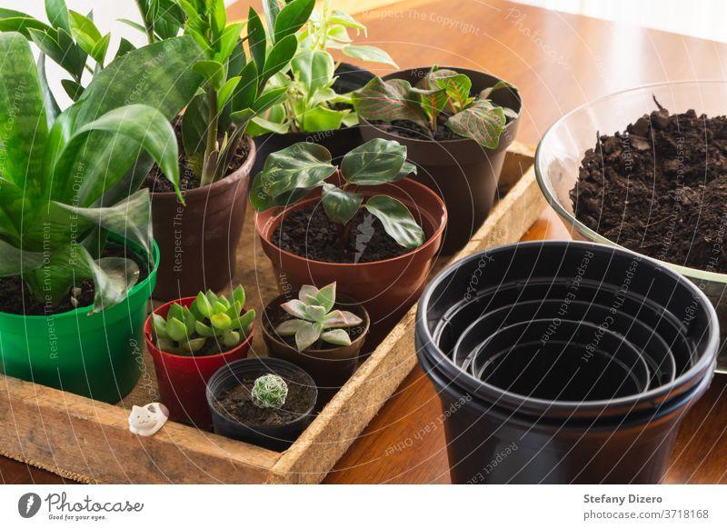 Mehrere Zimmerpflanzen bereit zum Umtopfen. Rustikale und warme Stimmung. grün Pflanze Sukkulente Kaktus natürlich Dekoration & Verzierung heimwärts Natur