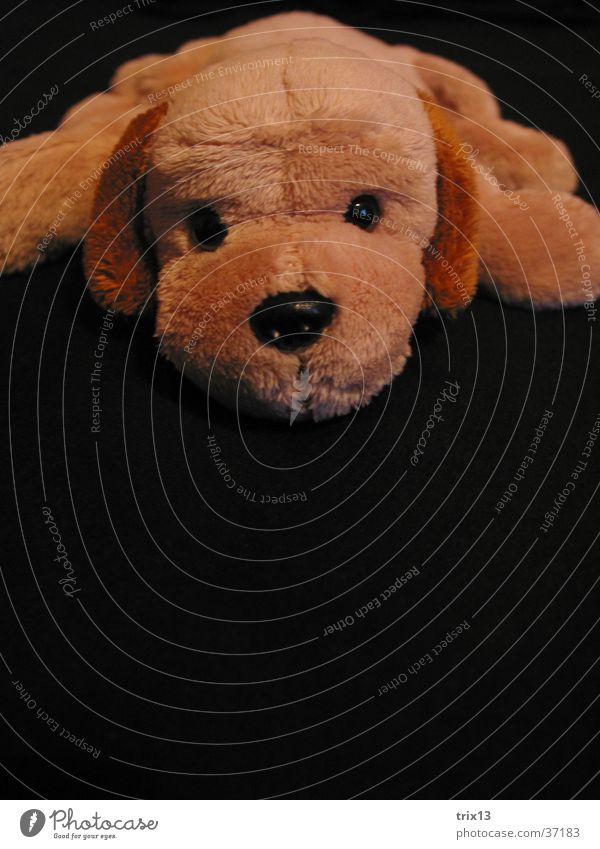 Plüschhund schwarz Auge dunkel Hund Nase Ohr Dinge Stofftiere