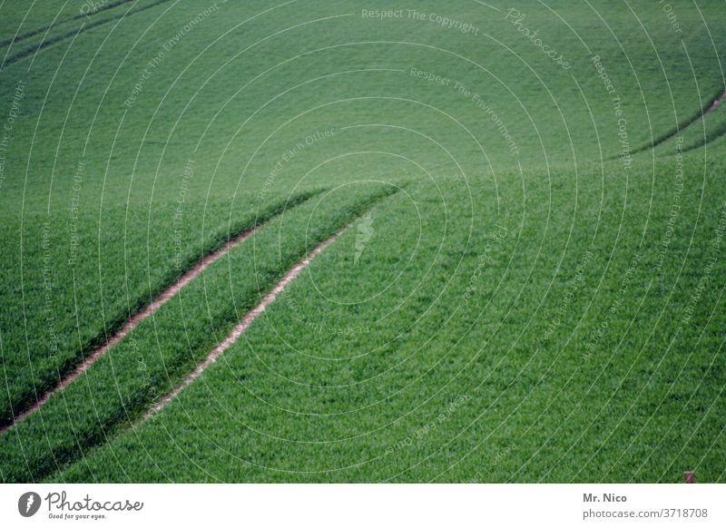 spuren im feld Furche Spuren Landwirtschaft Feld grün Ernte Traktorspur Kornfeld Wege & Pfade Ackerbau Wachstum Natur Nutzpflanze Umwelt Getreide Pflanze