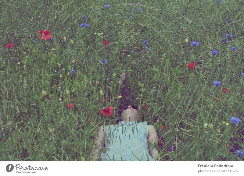 abgetaucht. Mensch Frau Natur Jugendliche Sommer Pflanze Landschaft Blume Junge Frau Erwachsene Wiese 18-30 Jahre feminin Gras Frühling Freiheit