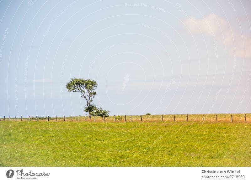 Ein durch den Nordseewind krumm gewachsener Baum steht ziemlich alleine am Horizont hinter einem Weidezaun auf einer Wiese. Landschaft Wind Zaun Natur Gras