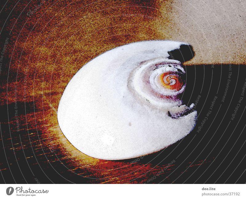 Muschel Meer gebrochen Filter