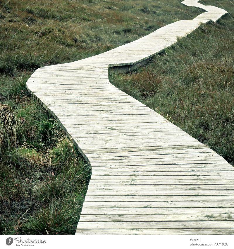 ungerade Umwelt Natur Landschaft Gras Sträucher Moos Grünpflanze Wiese Feld Wege & Pfade grün Holz Holzbrett Fußweg verzweigt Orientierung Ziel wandern