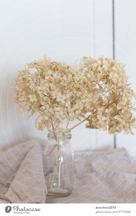 Helle getrocknete Hortensien in einer Glasvase Garten Blüte Blume Sommer Pflanze Detailaufnahme Farbfoto weiß Getrocknet Trockenblume Dekoration & Verzierung