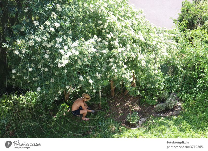 junger Mann unter einem blühenden Holunderbusch bei der Gartenarbeit Gartenpflanzen Gärtner Gartenbau gärtnern Gartenarbeit machen Wachstum anpflanzen Pflanzen