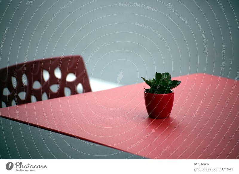 mein kleiner grüner kaktus | ut köln | ehrenfeld II Lifestyle Stuhl Tisch Umwelt Pflanze Kaktus rot Dekoration & Verzierung Café Biergarten Blumentopf