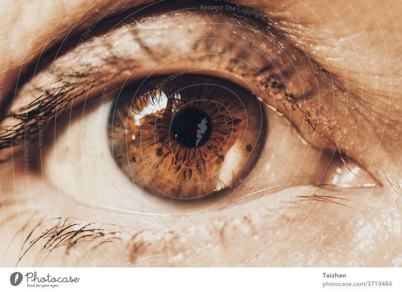 Detailaufnahme einer reifen Frau mit braungrünem Auge in Nahaufnahme knittern Menschen alt Lebensalter gealtert Alterung Kosmetik Blickfang Wimpern Augenlicht
