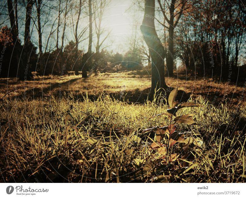 Offener Wald Lichtung Herbst Sonne Gegenlicht leuchtend strahlend Sonnenlicht lichtdurchflutet Bäume Sträucher Waldboden Idylle Unterholz Dickicht Wärme Holz