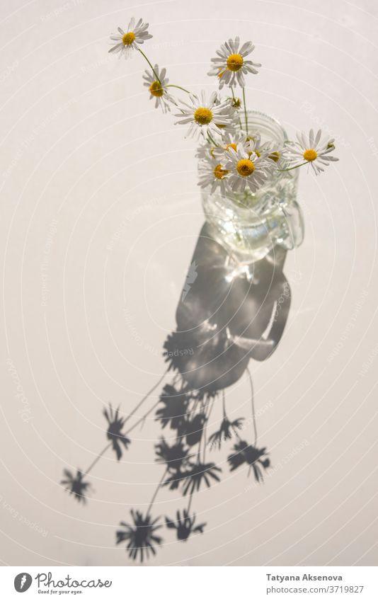 Gänseblümchenstrauß im Glasglas auf weißem Tisch bei sonnigem Wetter Blume Blüte Blumenstrauß Pflanze Sommer Nahaufnahme Kamille Blütezeit gelb geblümt grün
