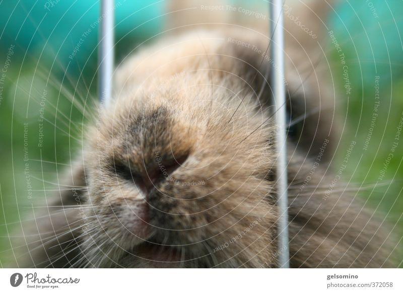 Hasennase Haare & Frisuren Nase Mund Natur Fell brünett Bart Tier Haustier Hase & Kaninchen 1 warten klein nah braun grün Farbfoto Außenaufnahme Tag Tierporträt