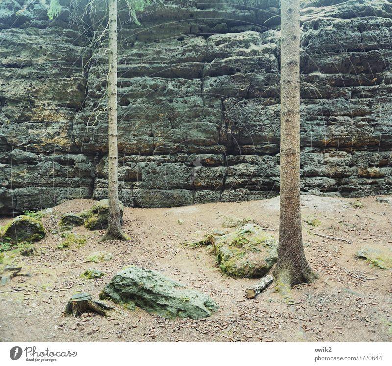 Mit dem Rücken zur Wand Elbsandsteingebirge Ostdeutschland Sächsische Schweiz Sachsen Idylle friedlich Nationalpark ruhig Pflanze bewachsen wildromantisch