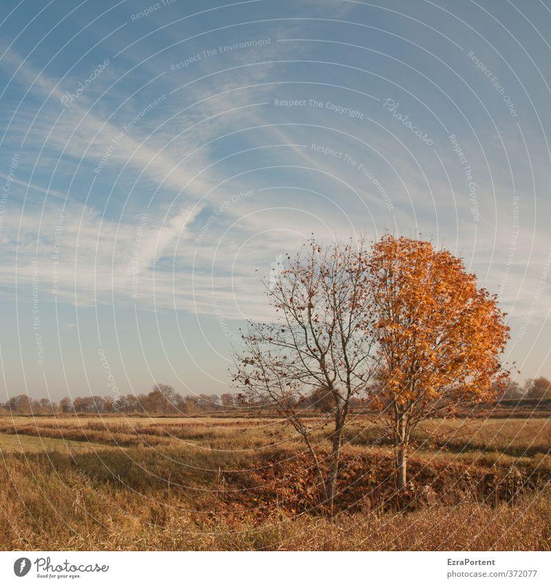 erster ;-) Himmel Natur blau Pflanze Baum Landschaft Wolken Blatt gelb Umwelt Wiese Herbst Holz natürlich außergewöhnlich braun