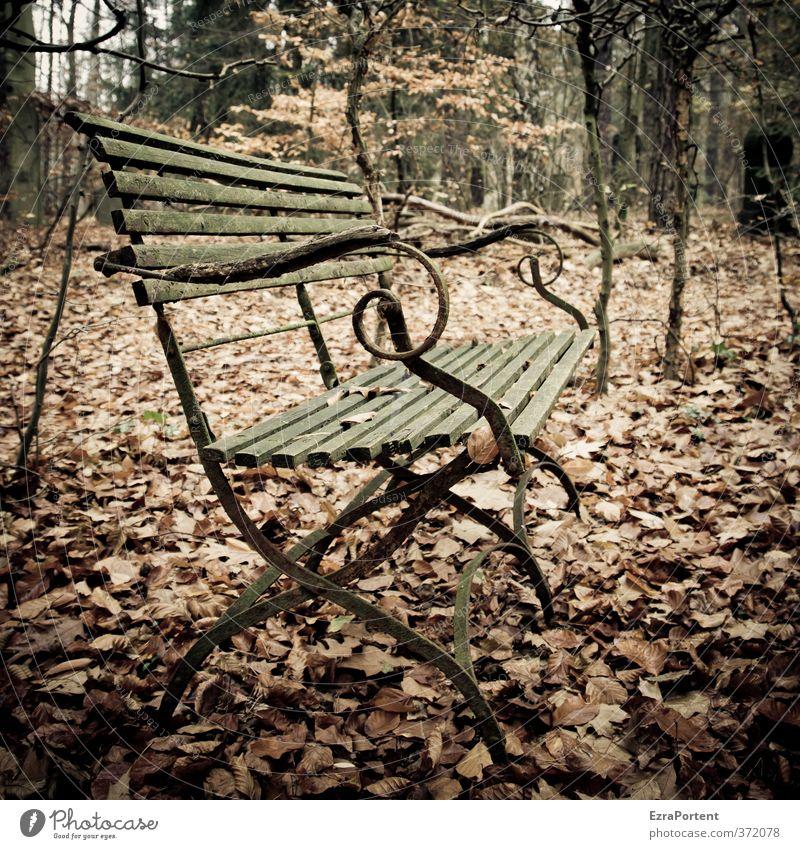 Banklaub Umwelt Natur Landschaft Pflanze Erde Herbst Wetter Baum Blatt Park Wald Holz Erholung alt ästhetisch dunkel braun gelb grün Traurigkeit Einsamkeit