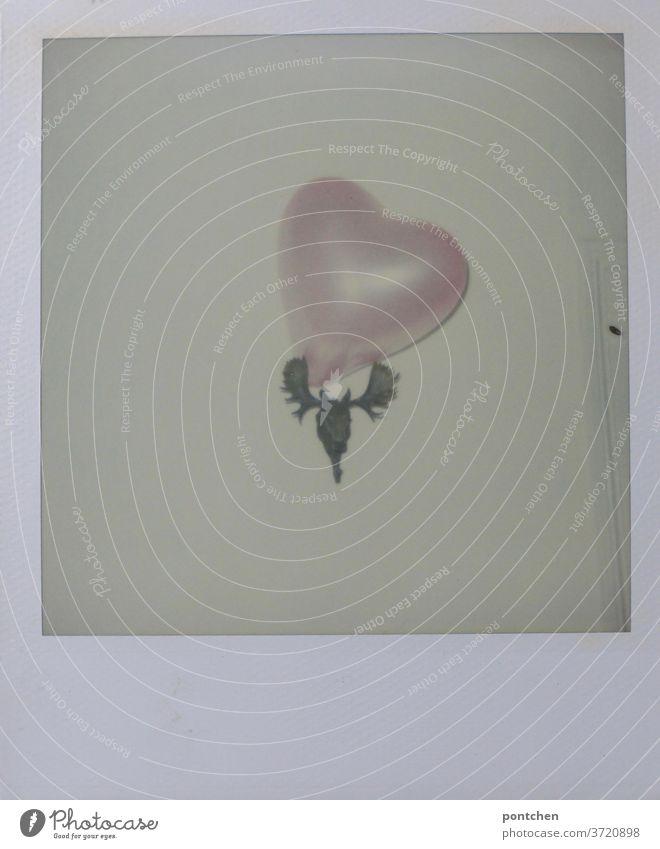 Elch mit Herz! Ein Plastik Elchgeweih hängt an einer Wand und ist mit einem Herzluftballon geschmückt. Skurriler Kitsch. Polaroid kitsch skuril wohnen