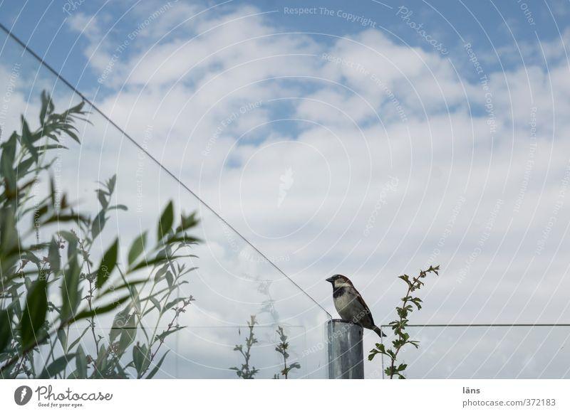 Aussichtsplatz grün Vogel warten Platz beobachten Aussicht Spatz Glaswand