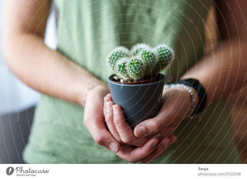 Junge Frau mit einem kleinen Kaktus in ihren Händen. Nahaufnahme, Teilabschnitt jung halten natürlich grün Pflanze Stachel Dorn Schmerz stachelig Natur