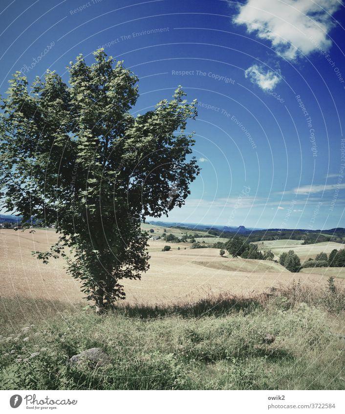 Standpunkt Baum Sächsische Schweiz Elbsandsteingebirge Ostdeutschland friedlich Horizont Panorama (Aussicht) Umwelt Berge u. Gebirge Freiheit Schönes Wetter