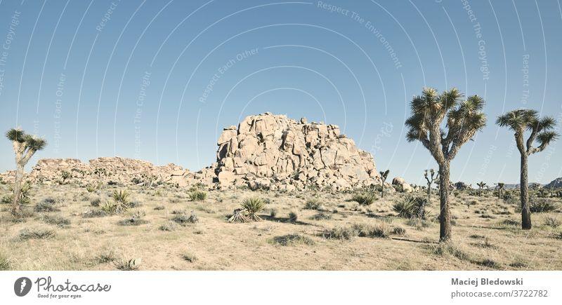 Panoramablick auf den Joshua-Tree-Nationalpark, Kalifornien, USA. Baum joshua national Park amerika Natur Landschaft wüst wild Yucca brevifolia Joshua Tree