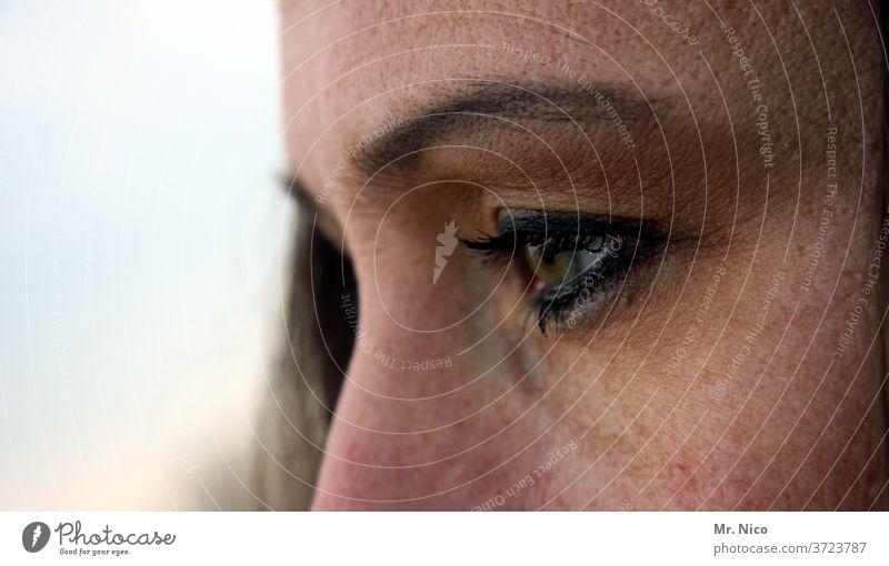 auge Auge Haut Blick Augenbraue Wimpern Gesicht Pupille Detailaufnahme Frau Sehvermögen Augenfarbe Sinnesorgane schön Nase nasenrücken feminin beobachten