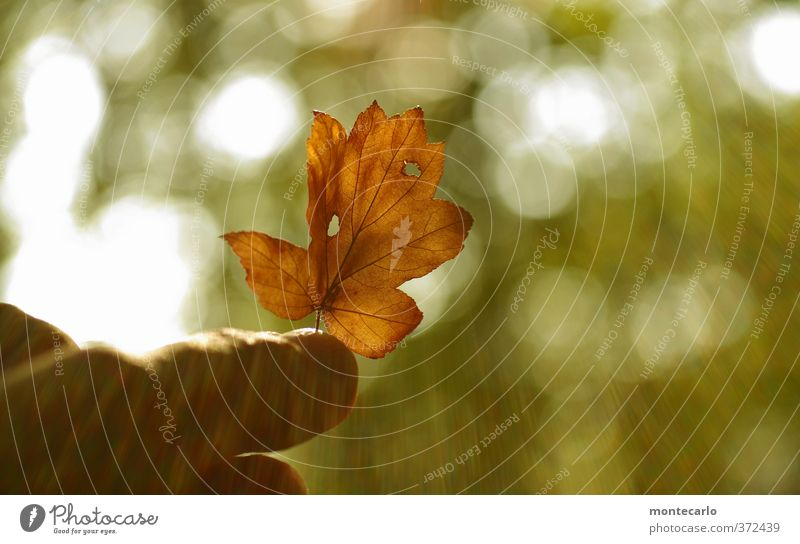 Entgegen Umwelt Natur Pflanze Sonne Schönes Wetter Blatt Grünpflanze Wildpflanze alt dünn authentisch einfach klein natürlich trocken Wärme braun grün Farbfoto