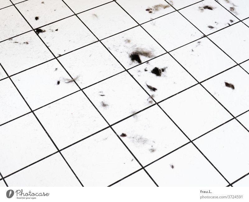 Die Frisörin ist gegangen, geblieben sind ein paar Haarbüschel auf dem Fußboden. Kacheln Häusliches Leben Fliesen u. Kacheln Küche Haare & Frisuren