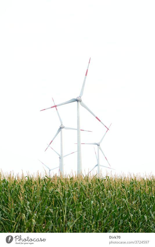 Windenergieanlagen im Maisfeld Windenergiekonverter Windkraftanlage Himmel Energiewirtschaft Erneuerbare Energie Elektrizität ökologisch alternativ Umwelt