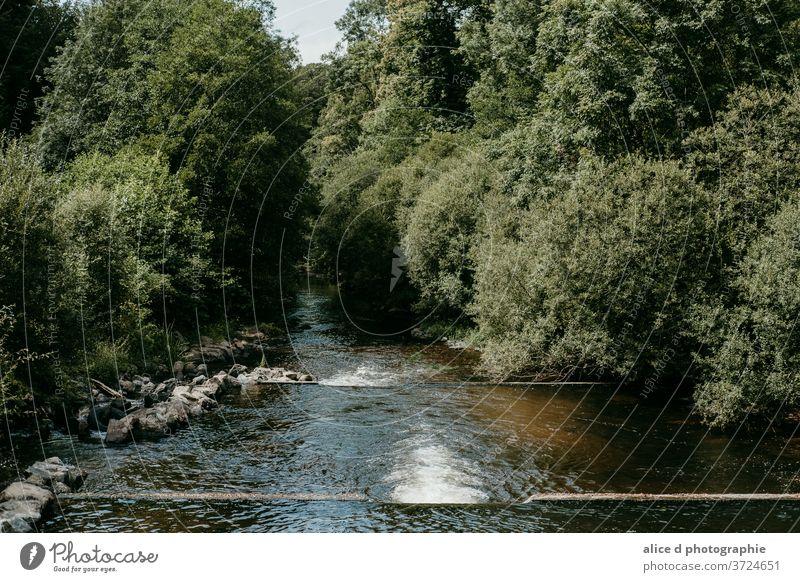 Fluss im Wald Schönheit Schönheit in der Natur Bank Großstadt Stadtleben Wolke - Himmel leer Umwelt idyllisch Landschaft - Landschaft keine Menschen im Freien