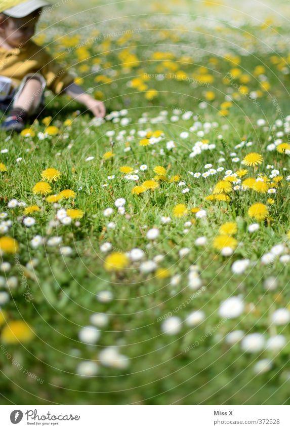 Blumenwiese Mensch Kind Sommer Blume Freude Wiese Frühling Spielen Blüte Kindheit sitzen Zufriedenheit niedlich Kleinkind Löwenzahn Blumenwiese