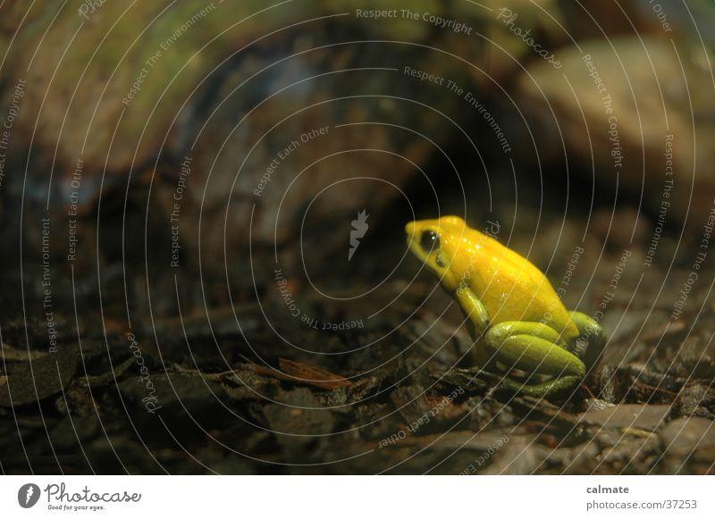 .: yellow frog :: gelb Verkehr Frosch