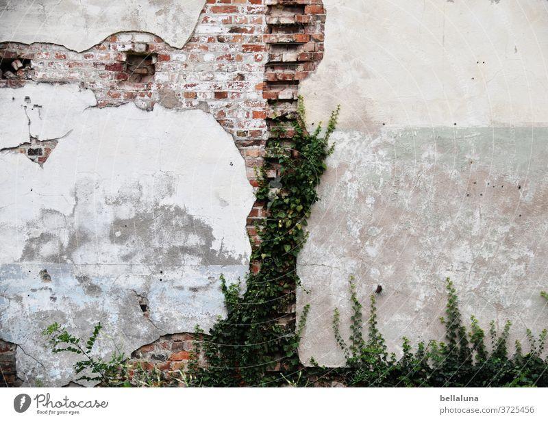 Das Gesicht des Bären an der Wand lost place alt kaputt Verfall Vergänglichkeit Vergangenheit Ruine Mauer Gebäude Haus Fassade Wandel & Veränderung Bauwerk