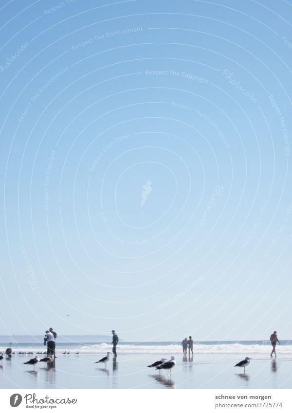möwen geschäftlich laufen lassen meer portugal maritim himmel blau strand see menschen horizont wellen wasser natur strahlen sonne sommer ruhe stille spazieren