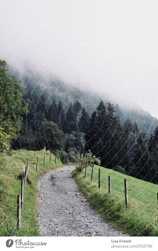 Weg - Natur - Nebel - Wald - grün Pfad Wege & Pfade schön Naturschutzgebiet Urlaubsstimmung Ferien & Urlaub & Reisen Österreich wandern Spazierweg spazieren