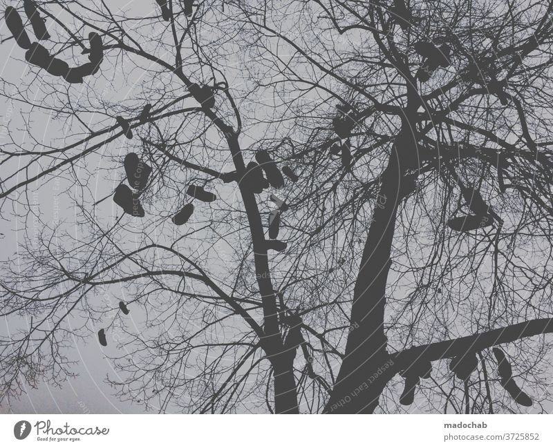 Fast Fashion Baum Schuhe Gegenlicht Zweige Himmel Zweige u. Äste Geäst Menschenleer Ast Außenaufnahme hängen Froschperspektive Herbst Natur herbstlich