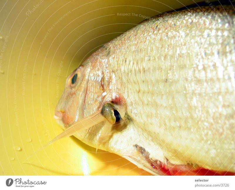 last-time-swimming Wasser Ernährung Fisch