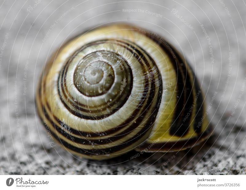 Schneckenhaus Schutz Strukturen & Formen Spirale Makroaufnahme Tier rund Symmetrie Hülle Unbewohnt