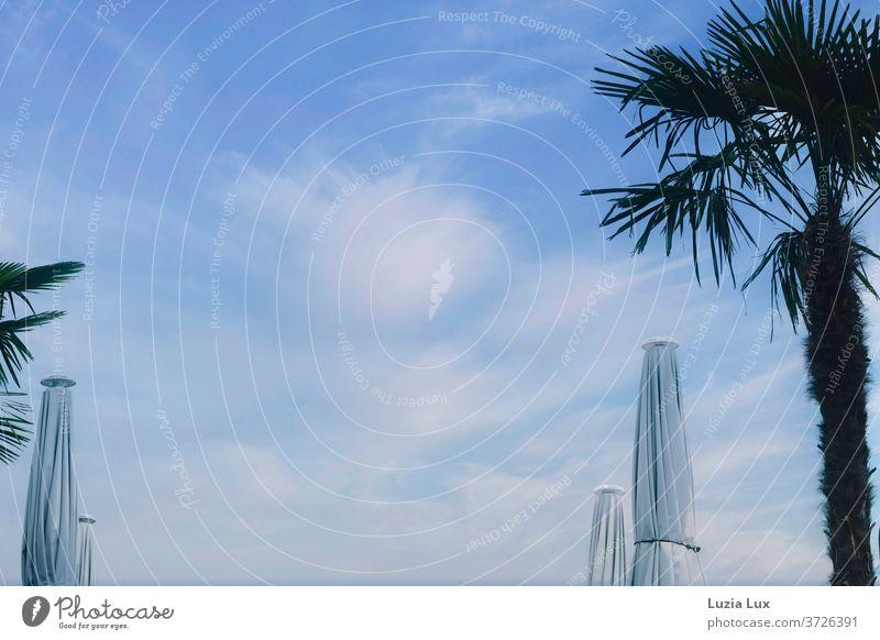 Geschlossene Sonnenschirme, Palmen und ein Sommerhimmel voller Wolken Himmel blau Außenaufnahme Farbfoto Tag Menschenleer Schönes Wetter Sonnenlicht weiß Licht