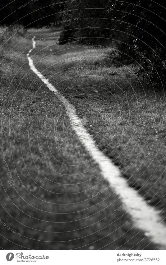 Schmaler langer Pfad durch eine Wiese gehen Weg Wandern spazieren Spaziergang Natur wandern Außenaufnahme Wege & Pfade Einsamkeit Baum Umwelt Erholung