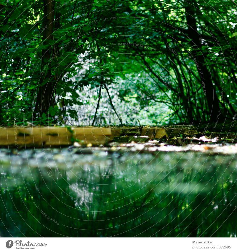 Wildnis. Natur Tier Wasser Sommer Pflanze Baum Sträucher Grünpflanze Wald Urwald Moor Sumpf Teich Bach Fluss dunkel glänzend nass natürlich wild grün Abenteuer