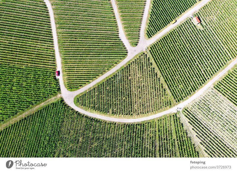 Weinberg von oben Draufsicht Bild Luftbild Drohne Drohnen Bilder Luftaufnahme Vogelperspektive grün Weinbau Reben Landwirtschaft fotoping abstrakt grüner