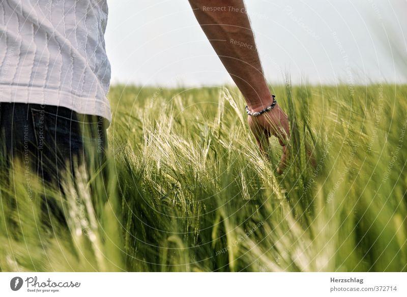 Fühlst du es... Arme Hand Frühling Sommer Getreide Feld berühren Erholung Liebe streichen träumen ästhetisch nah nachhaltig grün Glück Lebensfreude Leidenschaft