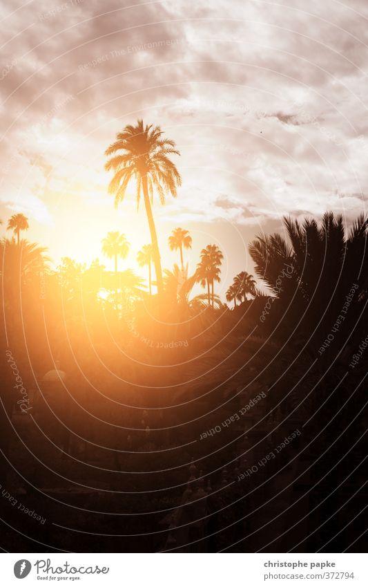 Palmenromantik Ferien & Urlaub & Reisen Ferne Sommer Sommerurlaub Sonne Landschaft Himmel Wolken Sonnenaufgang Sonnenuntergang Sonnenlicht Schönes Wetter Garten