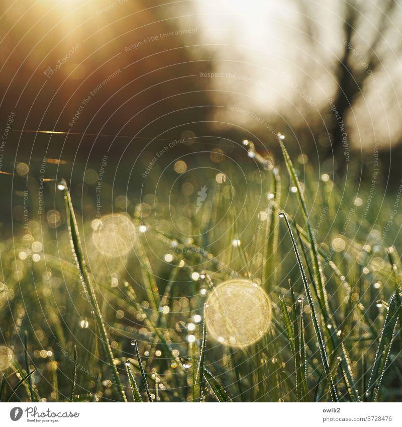 Punktlandung Wiese Gras nass Wassertropfen glitzernd geheimnisvoll leuchtend Detailaufnahme grün Natur Farbfoto Makroaufnahme Menschenleer Nahaufnahme