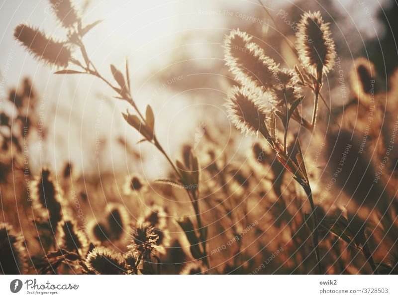 Feldstudie Sträucher Sonne Sommer Pflanze Schönes Wetter Umwelt Natur Landschaft Gras leuchten Licht Schatten Kontrast Sonnenlicht Gegenlicht Idylle hell Totale
