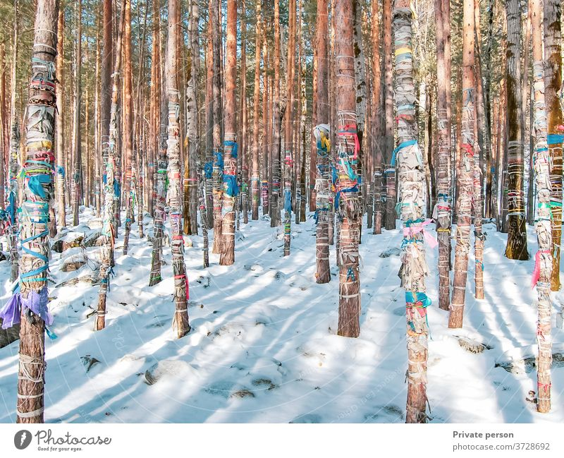 Winterwald mit Schnee bedeckt, farbige Bänder werden an Baumstämme gebunden, heilige Ritualbänder als Opfer für Geister, Buddhismus Wald Bäume kalt Klebeband