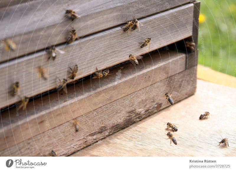 bienenanflug am bienenstock honigbienen bienenvolk nisthöhle imkern ankommen blütenstaub pollen höschen beute holz bienenstand imkerei natur tiere tierschutz