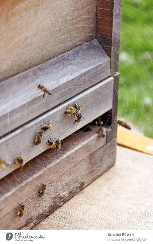 bienen am bienenstock honigbienen bienenvolk nisthöhle imkern anflug ankommen blütenstaub pollen höschen beute holz bienenstand imkerei natur tiere tierschutz