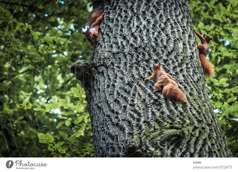 Hömma, samma und womma Natur grün Baum rot Freude Tier Umwelt Spielen lustig klein natürlich braun Wildtier niedlich Tiergruppe festhalten