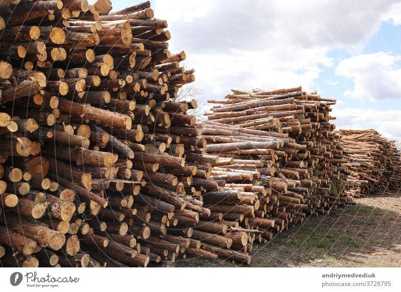 Seitenansicht von Nutzholz, Kiefernstämme nach Kahlschlag. unkontrollierte Abholzung. selektive Fokussierung. Baum Entwaldung Wald Baumstämme geschnitten