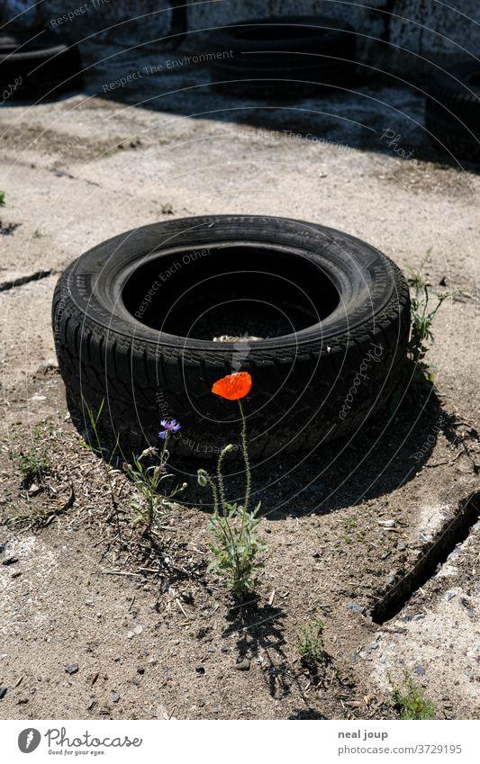 Mohnblüte, Schrottplatz, Autoreifen Müll Recycling Pflanze Blüte Umweltverschmutzung Problematik gummi Kunststoff Kontrast schwarz trashig nachhaltig Schmutz