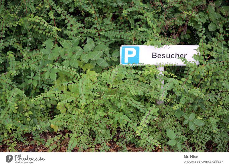 Besucherparkplatz Parkplatz Schilder & Markierungen parken Hinweisschild Sträucher Pflanze gebüsch grün für Besucher Schriftzeichen parkplatzmarkierung